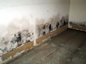 Mold Sampling/Inspections